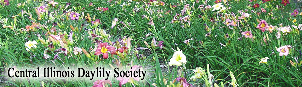 Central Illinois Daylily Society